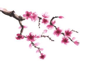 mincir avec les fleurs de bach